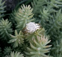 14k Gold Ring with Cubic Zirconia  Fresno, 93728