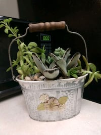 Galvanized container with live succulents