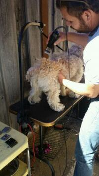 Grooming services.  Dog is not for sale San Jose, 95136