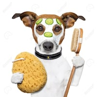 Professional Pet Groomers/Dog Kennels Stuffs - NEEDED ASAP! (contact us) TORONTO