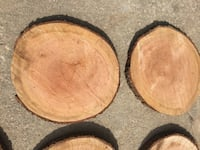 "20"" cherry wood slices. Great for Centerpieces  Reminderville, 44202"