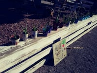Aloe vera plants / assorted sizes starting at $1. Las Vegas, 89121