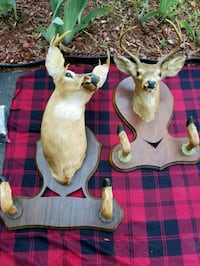 Mounted deer heads from 1959 and 1960 Bristow, 20136