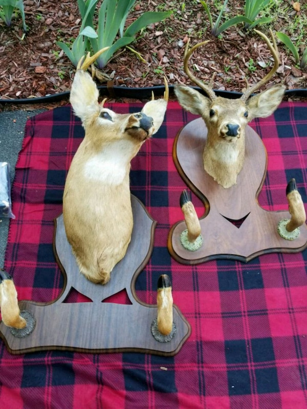 Mounted deer heads from 1959 and 1960